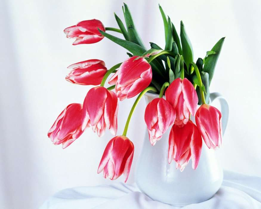 Plants, Flowers, Tulips, Bouquets, March 8, International Women's Day (IWD)
