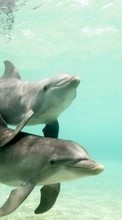 Dolfins,Animals