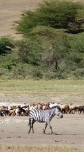 Landscape,Zebra,Animals