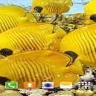 Scaricare sfondi in movimento Aquarium by Top Live Wallpapers per un desktop di telefoni e tablet.