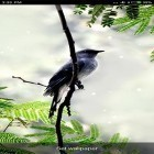 Oltre sfondi animati su Android Cat in the box, scarica apk gratis Birds sounds and ringtones.