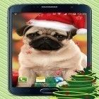 Oltre sfondi animati su Android Bubbles by Happy live wallpapers, scarica apk gratis Christmas dogs.