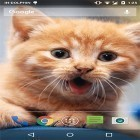 Oltre sfondi animati su Android Touch Xperia Z fly, scarica apk gratis Cute cat by Psii.