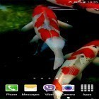 Oltre sfondi animati su Android Fluid, scarica apk gratis Koi by Jacal Video Live Wallpapers.