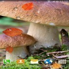 Oltre sfondi animati su Android True water, scarica apk gratis Mushrooms by BlackBird Wallpapers.