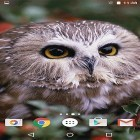 Oltre sfondi animati su Android Night nature HD, scarica apk gratis Owl by MISVI Apps for Your Phone.