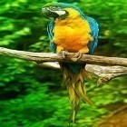 Oltre sfondi animati su Android Dynamical ripples, scarica apk gratis Parrot by Live Animals APPS.