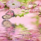 Oltre sfondi animati su Android True water, scarica apk gratis Pink butterfly by Live Wallpaper Workshop.