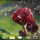 Oltre sfondi animati su Android Nature HD by Live Wallpapers Ltd., scarica apk gratis Rose: Raindrop.