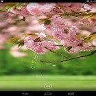 Oltre sfondi animati su Android Hearts by Kittehface Software, scarica apk gratis Spring flowers by orchid.