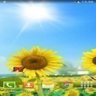 Oltre sfondi animati su Android Hearts by Kittehface Software, scarica apk gratis Sunflowers.