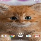 Oltre sfondi animati su Android Pinwheel by orchid, scarica apk gratis Сute kittens.