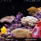 Oltre sfondi animati su Android My beach HD, scarica apk gratis Aquarium by Best Live Wallpapers Free.