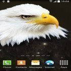 Oltre sfondi animati su Android Dynamical ripples, scarica apk gratis Birds by Blackbird wallpapers.