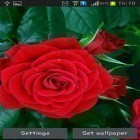 Oltre sfondi animati su Android Solar system HD deluxe edition, scarica apk gratis Blooming red rose.
