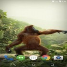 Oltre sfondi animati su Android Roses by Live Wallpaper HD 3D, scarica apk gratis Dancing monkey.