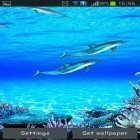 Scaricare sfondi in movimento Dolphins sounds per un desktop di telefoni e tablet.