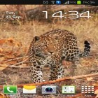 Oltre sfondi animati su Android Thunderstorm by Creative Factory Wallpapers, scarica apk gratis Leopard.