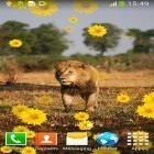 Oltre sfondi animati su Android Electric screen by iim mobile, scarica apk gratis Lion by Live Wallpapers Free.