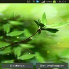 Oltre sfondi animati su Android Night nature HD, scarica apk gratis Spring buds.