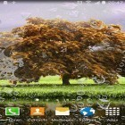 Oltre sfondi animati su Android Deer and nature 3D, scarica apk gratis Spring landscapes.