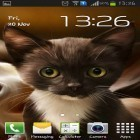 Oltre sfondi animati su Android Cute by EvlcmApp, scarica apk gratis Surprised kitty.